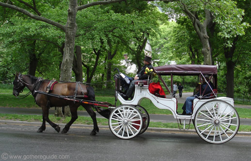 Central Park Horse Carriage New York