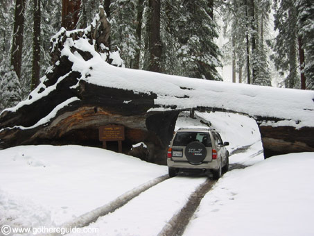 Sequoia park Tunnel Log